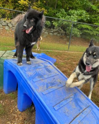 Best friends furever❤️  Here at Lakes Region Pet Resort, we also offer dog training, doggy daycare, boarding (for dogs 🐶 and cats 🐱), and a special service called in-home boarding for certain dogs such as older dogs or dogs that need more attention than most. We also offer the option of a board and train so your pets can learn while you're away.   Call or email us to schedule your pet's next stay!  .  .  .  #doggyday #doglife #lifewithdogs #itsarufflife #doggydaycarelife #dogbehavior #caninebehavior #dogpack #lifeofadog #dogsoftheday #dogsofinsta #dogsforlife #meredith #lakewinnipesaukee #gooddogs #lakelife #doggolife #doggosofinsta #dogsofinstagram #puppies #dogtraining #obediencetraining