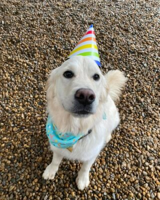 Happy birthday Willow!🎉  Here at Lakes Region Pet Resort, we also offer dog training, doggy daycare, boarding (for dogs 🐶 and cats 🐱), and a special service called in-home boarding for certain dogs such as older dogs or dogs that need more attention than most. We also offer the option of a board and train so your pets can learn while you're away.   Call or email us to schedule your pet's next stay!  .  .  .  #doggyday #doglife #lifewithdogs #itsarufflife #doggydaycarelife #dogbehavior #caninebehavior #dogpack #lifeofadog #dogsoftheday #dogsofinsta #dogsforlife #meredith #lakewinnipesaukee #gooddogs #lakelife #doggolife #doggosofinsta #dogsofinstagram #puppies #dogtraining #obediencetraining