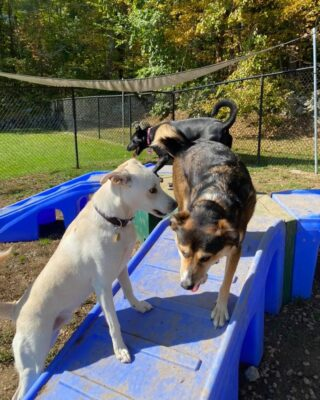 Everyone is having a great Friday here at LRPR!   Here at Lakes Region Pet Resort, we also offer dog training, doggy daycare, boarding (for dogs 🐶 and cats 🐱), and a special service called in-home boarding for certain dogs such as older dogs or dogs that need more attention than most. We also offer the option of a board and train so your pets can learn while you're away.   Call or email us to schedule your pet's next stay!  .  .  .  #doggyday #doglife #lifewithdogs #itsarufflife #doggydaycarelife #dogbehavior #caninebehavior #dogpack #lifeofadog #dogsoftheday #dogsofinsta #dogsforlife #meredith #lakewinnipesaukee #gooddogs #lakelife #doggolife #doggosofinsta #dogsofinstagram #puppies #dogtraining #obediencetraining