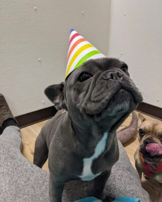 There is a birthday girl in the house today! Help us wish Bleue a very happy birthday!🎉  Here at Lakes Region Pet Resort, we also offer dog training, doggy daycare, boarding (for dogs 🐶 and cats 🐱), and a special service called in-home boarding for certain dogs such as older dogs or dogs that need more attention than most. We also offer the option of a board and train so your pets can learn while you're away.   Call or email us to schedule your pet's next stay!  .  .  .  #doggyday #doglife #lifewithdogs #itsarufflife #doggydaycarelife #dogbehavior #caninebehavior #dogpack #lifeofadog #dogsoftheday #dogsofinsta #dogsforlife #meredith #lakewinnipesaukee #gooddogs #lakelife #doggolife #doggosofinsta #dogsofinstagram #puppies #dogtraining #obediencetraining