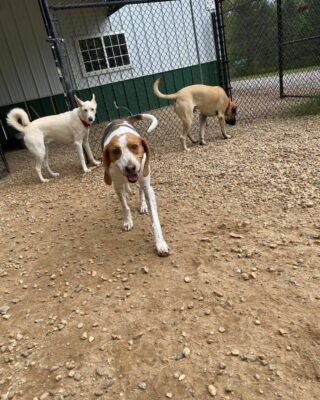 Brodie, Beckett, Fred, and Riley  Here at Lakes Region Pet Resort, we also offer dog training, doggy daycare, boarding (for dogs 🐶 and cats 🐱), and a special service called in-home boarding for certain dogs such as older dogs or dogs that need more attention than most. We also offer the option of a board and train so your pets can learn while you're away.   Call or email us to schedule your pet's next stay!  .  .  .  #doggyday #doglife #lifewithdogs #itsarufflife #doggydaycarelife #dogbehavior #caninebehavior #dogpack #lifeofadog #dogsoftheday #dogsofinsta #dogsforlife #meredith #lakewinnipesaukee #gooddogs #lakelife #doggolife #doggosofinsta #dogsofinstagram #puppies #dogtraining #obediencetraining